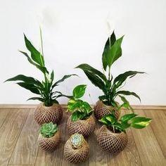 Aprenda o passo a passo da técnica kokedama, quais plantas usar e como cuidar, além de ideias e inspirações para você mesmo fazer arranjos maravilhosos.