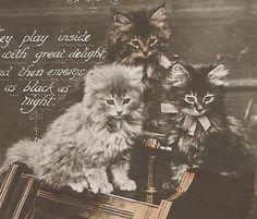 いつも一緒のなかよし3匹の子猫/アンティークポストカード - ヤフオク!