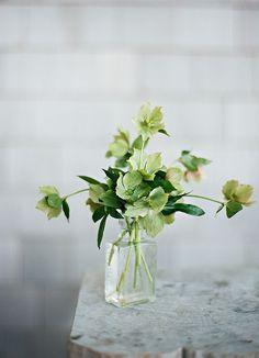 Bouquet of green flowers Green Plants, Green Flowers, Diy Flowers, Beautiful Flowers, Wedding Flowers, Table Flowers, Deco Floral, Arte Floral, Floral Design