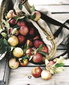 apples. mikkel vang.