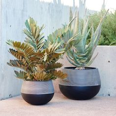 "Half Ridged Planters || west elm $99-$149 ||       Large Round: 19.3""diam. x 14.2""h.     Small Round: 13.8""diam. x 10.2""h."