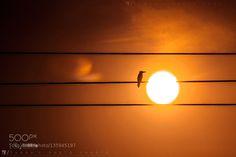 Kingfisher sunset by SunanKazi