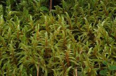 Seinäsammal Lava, Herbs, Plants, Herb, Plant, Pallet, Planets, Medicinal Plants