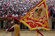 Corteo storico del Palio dell'Assunta 2008. Comparsa della Contrada di Valdimontone: Il Paggio Maggiore. Foto tratta dal sito http://palio.be/