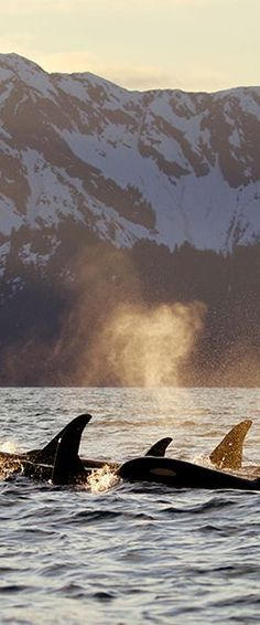 A journey to Alaska with Seabourn is one of almost incomprehensible beauty.  Kayak through glaciers, wave to the wildlife watching from the shore, then grab your camera as humpback whales breach in the distance. But beware – your photos will not be able to do justice to what your eyes, and your memories will experience.