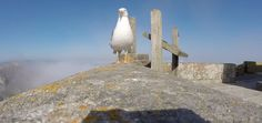 Seagull Stealing A GoPro Gets The Best Air Clip Ever  http://animalbuzzerstore.com/seagull-stealing-a-gopro-gets-the-best-air-clip-ever/