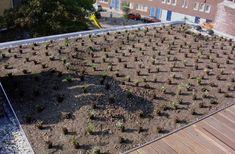 planting scheme on roof garden rotterdam via Gardenista ZinCo Green Rood Technology