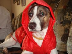 In his raincoat!
