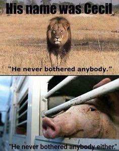 why #vegan   against animal cruelty and exploitation