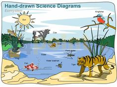 Editable PowerPoint Template - Science Diagrams Hand-drawn - Ecosystem