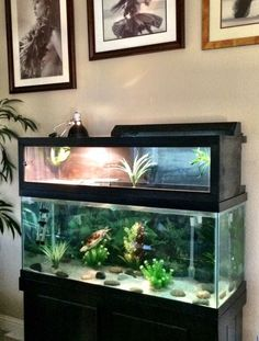 I made this turtle basking penthouse for my son& turtle , Turtle Reptile, Turtle Habitat, Reptile Habitat, Reptile Room, Turtle Pond, Pet Turtle, Tortoise Turtle, Turtle Basking Area, Aquatic Turtle Tank