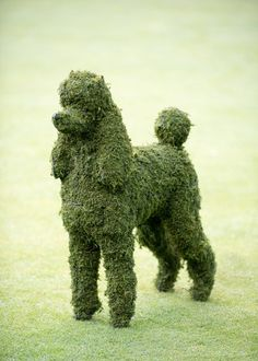 Poodle garden sculpture - Create a show stopping display in your garden with this beautiful topiary frame. Supplied as a frame filled with sphagnum moss. The frame has a large hole frame filled with sphagnum moss. With a large hole at the bottom, it can be completely opened to easily fit around established plants. The frame is hand made with high quality metal wires which have been epoxy coated to prevent rusting.