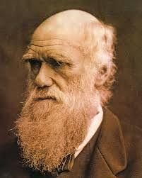 Risultati immagini per darwin