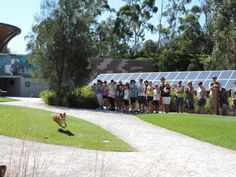 Dingos on the loose at Healesville Sanctuary!
