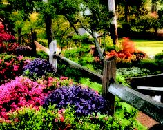 Beautiful shot from Azalea and Spring Flower Trail in 2010.  Talkin' Tyler Blog