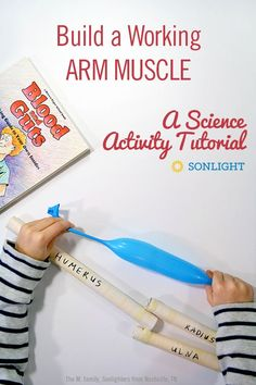 Build Learn Skeleton Muscle Model 7+ Grafix Explore your Body