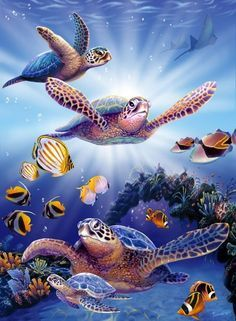 Image for Turtles In Light