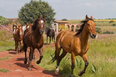 Another good day here at the ranch. Our friends the horses are ready to go out and enjoy a ride ... http://rancholascascadas.com/ride/