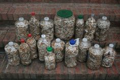 1000 Images About Cigarrette Butt Pollution On Pinterest