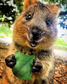 Did you know that these happy little guys are just a short ferry ride from Hillarys Boat Harbour? Funny Animal Photos, Animal Memes, Animal Pictures, Super Cute Animals, Cute Baby Animals, Funny Animals, Animal Magic, Animal 2, Happy Animals