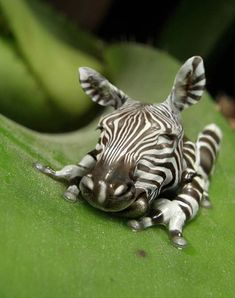 A zebra-frog.. sometimes I wish animals like this were real.