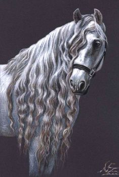 Draw Horses animal horse drawings - Realistic animal drawings: Drawing is a form of visual medium which can be done through graphite, color pencils, markers, ink pens and anything else one can think of. Beginners usually attempt their Realistic Animal Drawings, Horse Drawings, Art Drawings, Pencil Drawings, Drawing Animals, Beautiful Horses, Animals Beautiful, Horse Artwork, Horse Paintings