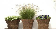 Im Spätsommer ist oft wieder Platz für neue Pflanz-Ideen: Mit sonnenwarmen Farben, filigranen Halmen und federleichten Blüten erobern Ziergräser jetzt Terrassen und Balkone.
