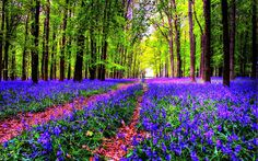 FOTOFRONTERA: 52 Imágenes bonitas de primavera (shared via SlingPic)