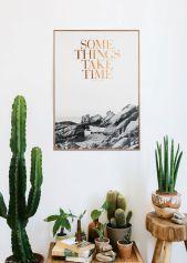cactus interior inspiration