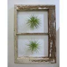 Floating Window Air Plant Wall Decoration by Zsuzsanna Barbu | UncommonGoods Woodworking Design Challenge Semi-finals