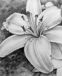 Discover recipes, home ideas, style inspiration and other ideas to try. Flower Sketch Pencil, Pencil Drawings Of Flowers, Flower Sketches, Hipster Drawings, Art Drawings Sketches, Lilies Drawing, Painting & Drawing, Drawing Tips, Charcoal Art