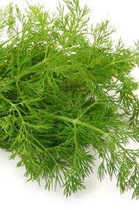 Kopr-báječná bylinka a pochutina – Príma receptář.