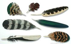Tania Patterson - Feather Brooches - sterling silver, enamel paint