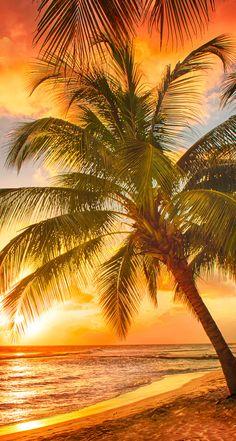 Comprar Moda redutor IndoorOutdoor Capacho - Sandy Tropical Paradise Beach com palmeiras eo Oceano mar por Edully Beautiful Sunrise, Beautiful Beaches, Tropical Paradise, Belle Photo, Pretty Pictures, Beach Pictures, Beautiful Landscapes, Beautiful World, Beautiful People