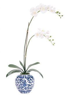 Natural Decorations, Inc. - Orchid | Phalaenopsis | White | Porcelain Blue | White