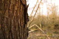 L'art de positiver : la promenade en forêt