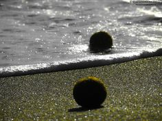 ball of the sea2