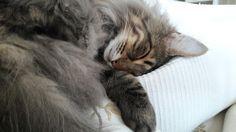 Il sonno di Mordecai
