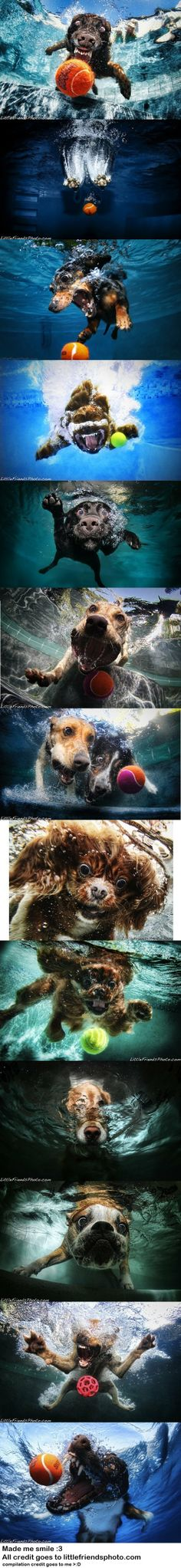 I just love the Underwater Dogs