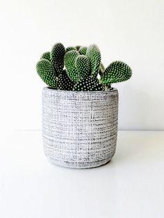 Scratchy Cactus in Striking Gray Container | | { Houseplants 3 #prickly