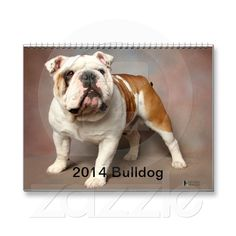 2014 Bulldog Calendar from Zazzle.com