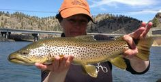 A Mo Brown Missouri River, Brown Trout, Fishing, Trout, Peaches, Pisces, Gone Fishing