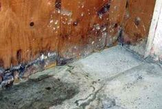 2005 best mold in basement images get rid of mold mold in rh pinterest com