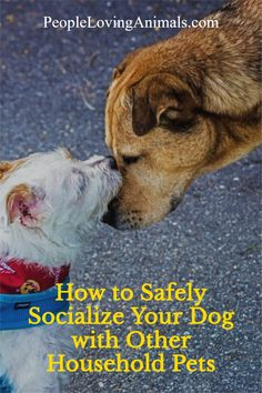 How to Safely Socialize Your Dog with Other Household Pets, step by step instructions by Professional Dog Trainer, Doggy Dan. Dog Training, Pet Care