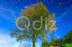 Qdiz Stock Photos Reflection of Tree and Sky in a Water,  #autumn #beautiful #blue #bright #colorful #fall #foliage #green #lake #landscape #leaf #leaves #natural #nature #park #pond #puddle #reflection #River #scenery #season #sky #tree #view #water #wood
