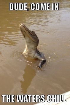 Gator Humor | No gator, I'll stay right here. Don't wanna get wet.| From Muse TD - Google+ -