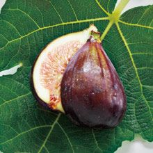 Fig Tree, the earthy scent of sun-warmed fresh fig. www.partylite.biz/cndlluvrs