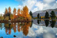 http://fineartamerica.com/featured/autumn-reflections-in-aspen-colorado-gregory-ballos.html