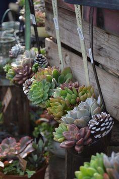 Vetplantjes in oude soeplepels, leuk voor aan de schutting