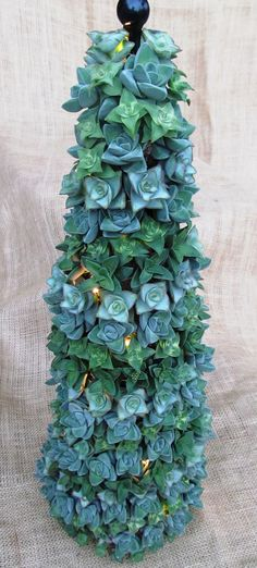 Succulent Christmas Tree in all Crassula by SucculentSolutions